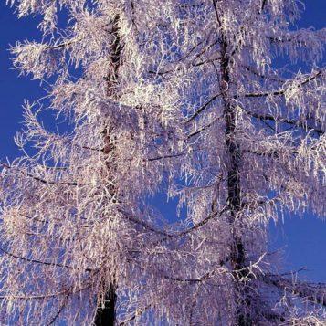 φωτογραφία φύσης, χιόνι