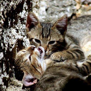 φωτογραφία φύσης, γάτες