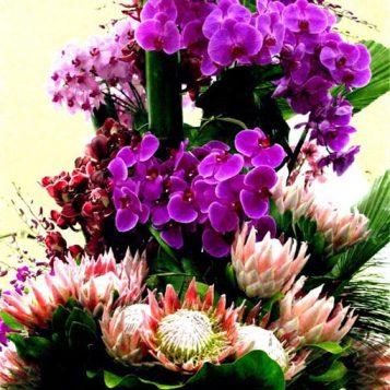 φωτογραφία φύσης, σύνθεση λουλουδιών