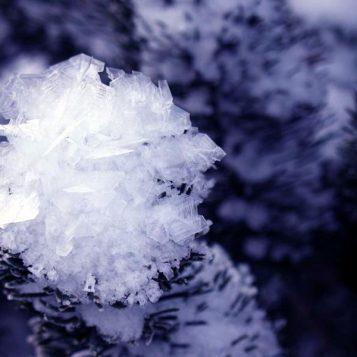φωτογραφία φύσης, λουλούδι από πάγο