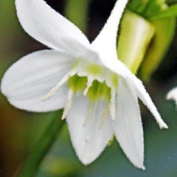 μοναχικό λουλούδι, φωτογραφία φύσης