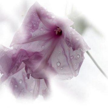 φωτογραφία φύσης, νοτισμένα άνθη