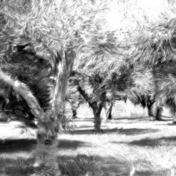 φωτογραφία φύσης, ελαιόδεντρα