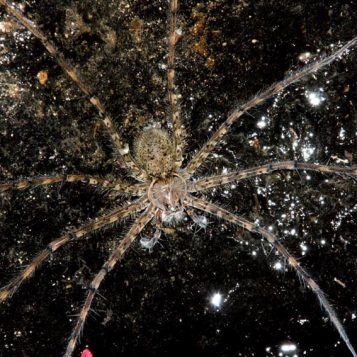 φωτογραφία φύσης, αράχνινο σύμπαν